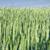 области · зерна · подробный · мнение · небе · продовольствие - Сток-фото © courtyardpix