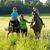 mulher · dois · cavalos - foto stock © courtyardpix
