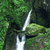 deep forest waterfall stock photo © cozyta