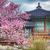beautiful pink cherry blossom sakura flower and with vintage stock photo © cozyta