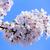 appelboom · voorjaar · boomgaard · boom - stockfoto © cozyta