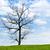 zöld · fű · naplemente · napos · égbolt · panoráma · szalag - stock fotó © cozyta