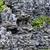 paesaggistica · pietra · erba · fiori · giardino · verde - foto d'archivio © cozyta