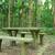 ピクニック · 場所 · 森林 · ツリー · 太陽 · 自然 - ストックフォト © cozyta