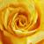 желтый · закрывается · цветок · текстуры · фон - Сток-фото © cozyta