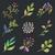 karpuzu · çiçekler · siluetleri · toplama · farklı · vektör - stok fotoğraf © creator76