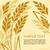 kłosie · dojrzały · kukurydza · rolniczy · wole · ilustracja - zdjęcia stock © creator76