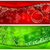 rouge · flocons · de · neige · blanche · arbres · design - photo stock © creator76
