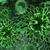 zöld · betolakodó · betegség · orvosi · egészség · gyógyszer - stock fotó © cuteimage