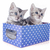bengal kitten in box stock photo © cynoclub