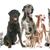 group of pet stock photo © cynoclub