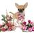 子犬 · ショートヘア · 花 · 犬 · バラ · ピンク - ストックフォト © cynoclub