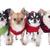 собака · собаки · группа · белый · ПЭТ · один - Сток-фото © cynoclub