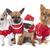 grupo · jovem · estúdio · vestir · cachorro · belo - foto stock © cynoclub