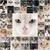 zwarte · ogen · haren · dieren · grappig · witte - stockfoto © cynoclub