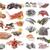 seafood fishs and shellfish stock photo © cynoclub