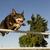 köpek · atlama · rekabet · çim · spor - stok fotoğraf © cynoclub