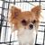 щенков · ПЭТ · белый · собака · путешествия · кровать - Сток-фото © cynoclub