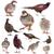 グループ · 鳥 · ペット · アフリカ · グレー · オウム - ストックフォト © cynoclub