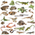 reptiel · groot · monitor · hagedis · gras - stockfoto © cynoclub