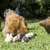 anne · tavuk · civciv · iki · küçük · aşırı - stok fotoğraf © cynoclub