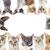 onbehaard · katten · witte - stockfoto © cynoclub