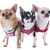 dressed chihuahuas stock photo © cynoclub