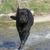 uruchomiony · rottweiler · dziedzinie · kwiaty · zęby - zdjęcia stock © cynoclub