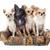 4 · かわいい · 子犬 · 犬 · 白 · ヨークシャー - ストックフォト © cynoclub