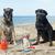 three dogs on the beach stock photo © cynoclub