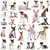 group of bull terrier stock photo © cynoclub