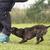 подготовки · полиции · Кинологический · собака · зубов - Сток-фото © cynoclub