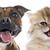 子猫 · 子犬 · 白 · 猫 · 黒 · 動物 - ストックフォト © cynoclub