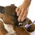 staffordshire bull terrier and tooth brush stock photo © cynoclub