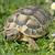 hermanns tortoise in grass stock photo © cynoclub