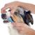 australiano · pastor · retrato · branco · cão · jovem - foto stock © cynoclub