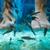 poissons · spa · traitement · de · la · peau · pieds · pédicure - photo stock © d13