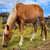 horse in easter island field stock photo © daboost