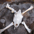 horse skull and bones stock photo © daboost
