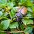 жук · выстрел · природы - Сток-фото © daboost
