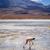 ピンク · 水 · 実例 · 鳥 · シルエット · 自由 - ストックフォト © daboost