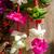 fleur · Madagascar · belle · rouge · jaune - photo stock © daboost