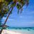 Palm · sable · plage · français · ville · soleil - photo stock © daboost