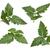 pomidorów · pozostawia · odizolowany · biały · liści · warzyw - zdjęcia stock © danny_smythe