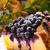 cheesecake blueberries stock photo © dar1930