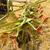 verde · campo · agrícola · máquina · em · torno · de · blue · sky - foto stock © dar1930