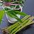 fraîches · vert · asperges · ruban · rustique - photo stock © dar1930