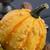 épouvantail · automne · nature · domaine · ferme · laisse - photo stock © dar1930
