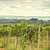 toszkán · vidék · gyönyörű · ősz · természet · fák - stock fotó © dar1930