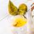 pear liqueur stock photo © dar1930